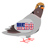 kamikaze-pigeon.png
